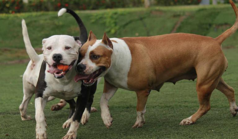Cane impazzito fa strage di animali a Vinovo