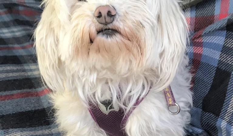 A Torino i funerali per cani. Le foto della cagnolina Bijoux oltre l'infinito