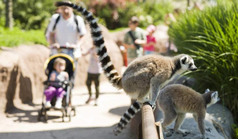 Ferragosto al Bioparco Zoom Torino: un successo per chi ama la natura. È boom di visitatori