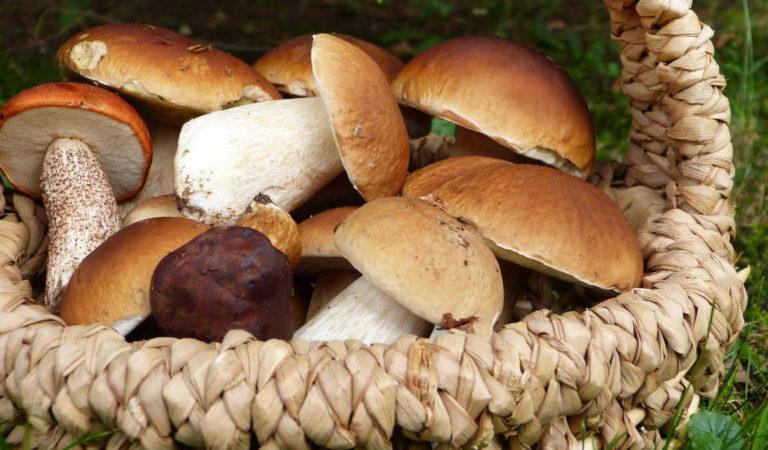 È la stagione dei funghi, impara a riconoscerli per non avvelenarti. Record di decessi