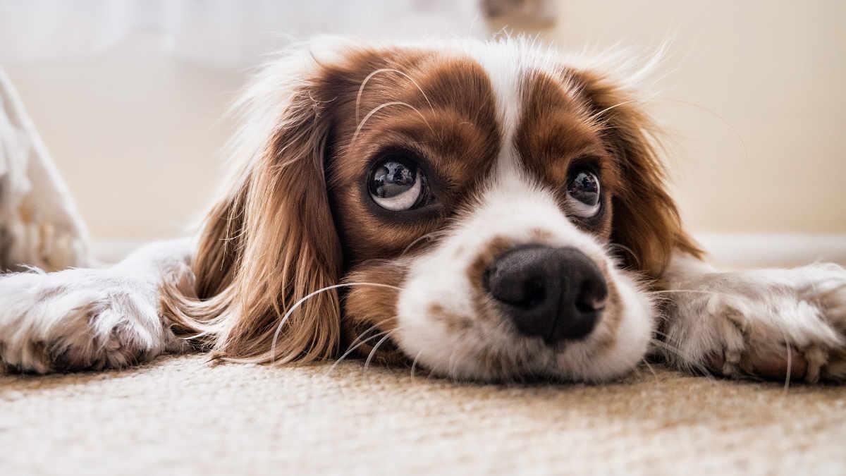 Conosci il tuo cane