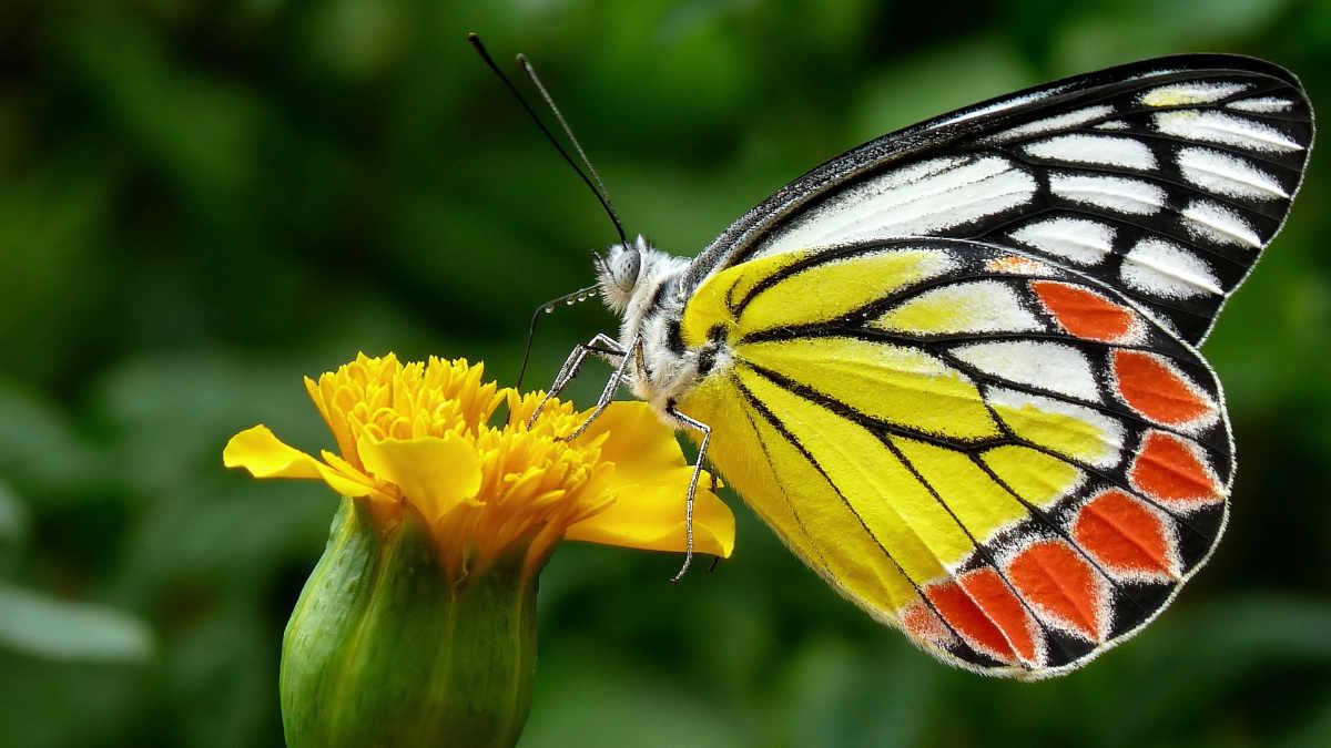 Farfalle in Tour