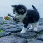 Soldi per restituire gatto. 1.000 euro per riavere il gatto