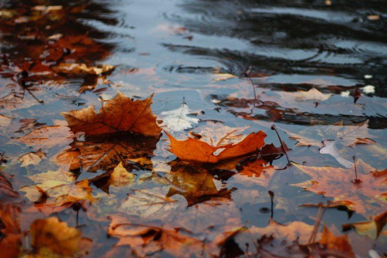 maltempo pioggia torino