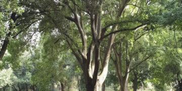 Torino città europea dell'albero