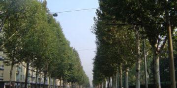 Torino città degli alberi