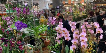 Orchiday Peraga Garden Center
