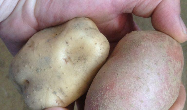 Budino di Patate, la ricetta del Consorzio del Bodi