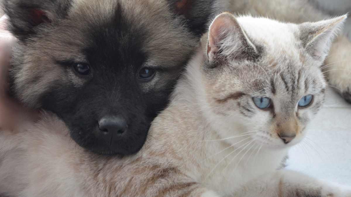 Cani, gatti e coronavirus