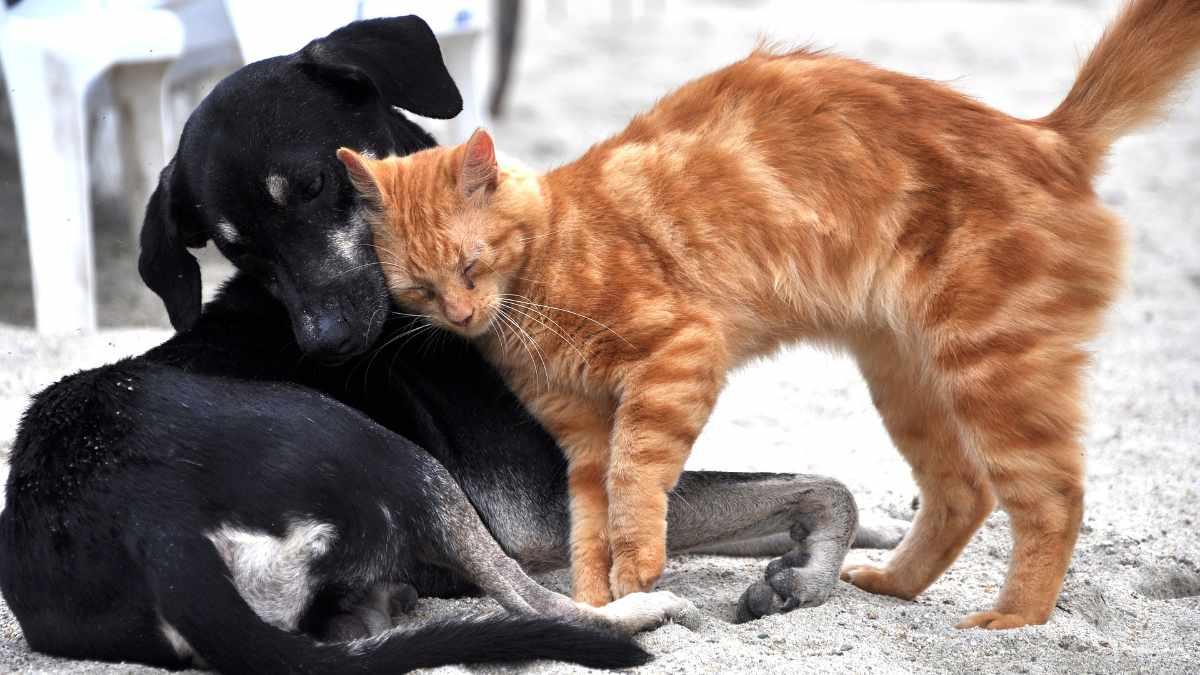 In Cina non si potranno più mangiare cani e gatti