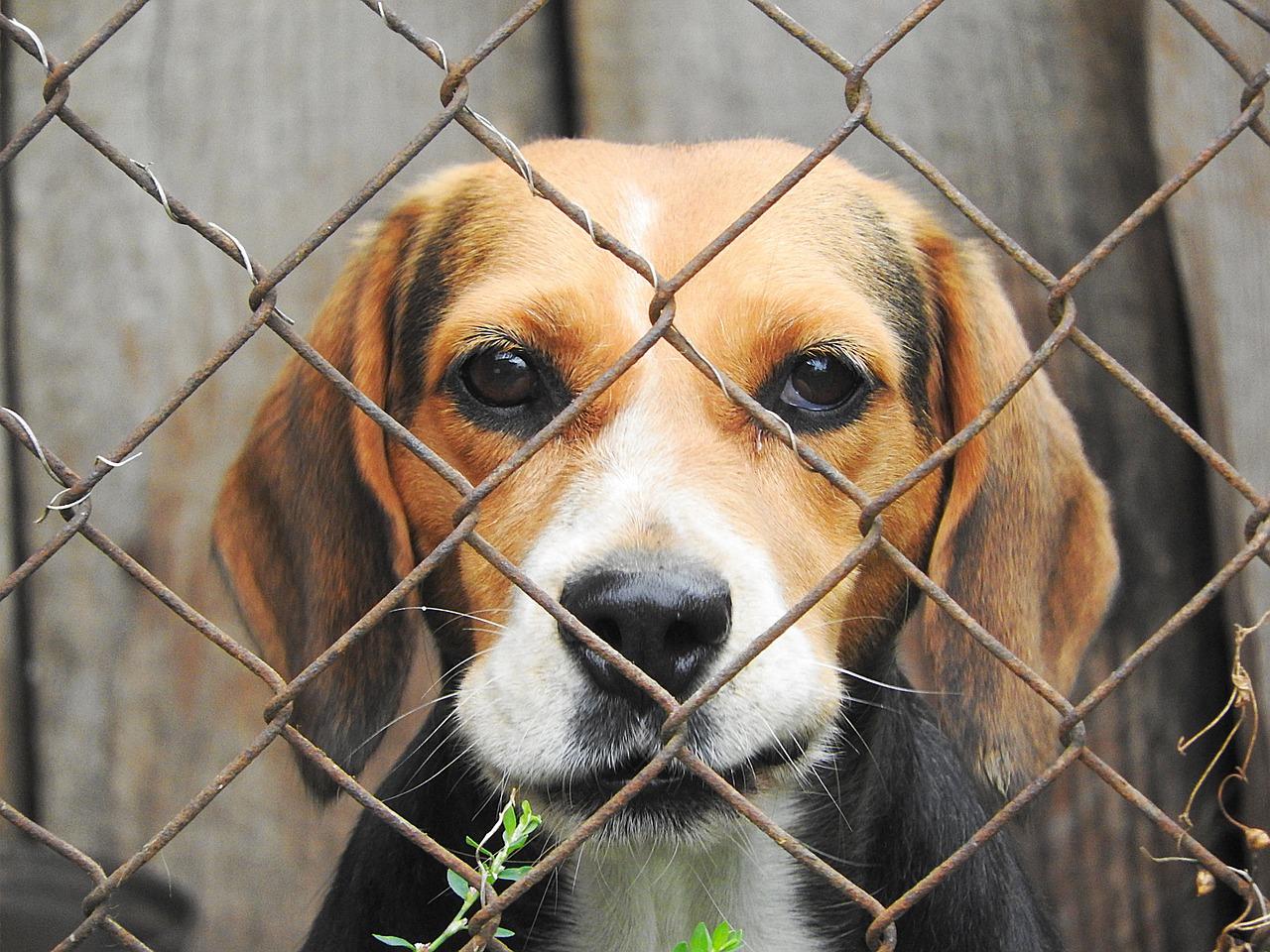 Cane senza acqua né cibo chiuso in cantina: salvato dagli agenti della Municipale