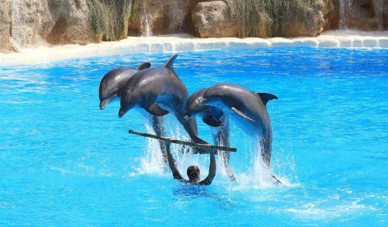 Voglia di parchi divertimento, acquatici, zoologici o di formazione? La nuova ordinanza Cirio