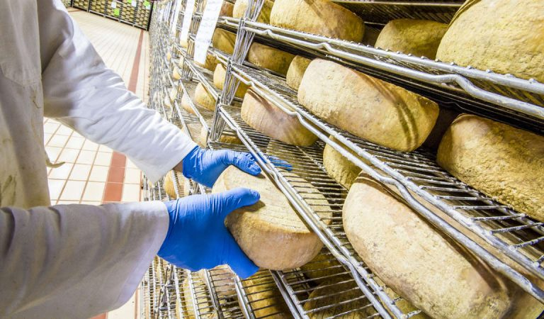 Allarme Escherichia Coli nel formaggio: pecorino richiamato dal mercato