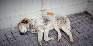 Dieci cani abbandonati sul balcone