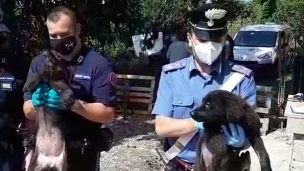 Canile abusivo scoperto a Chieri