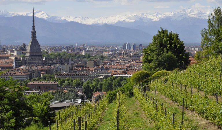 Vendemmia record a Torino  alla vigna di Villa della Regina