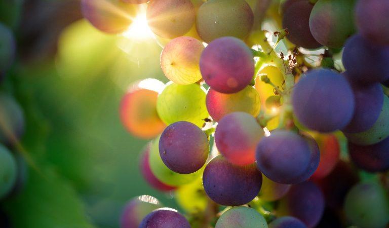 È Barolo la città italiana del vino 2021