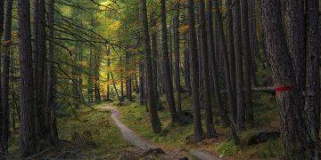 A Torino arrivano 15mila nuovi alberi
