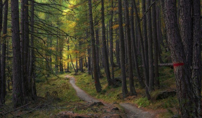 Maxi intervento verde a Torino: arrivano 15mila nuovi alberi