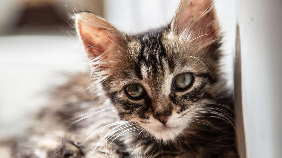 Gattino salvato a Torino