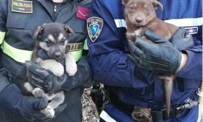 Cuccioli intrappolati a Torino