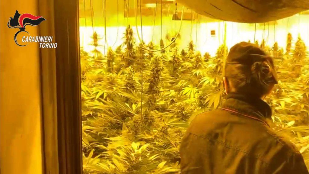 La fabbrica della marijuana