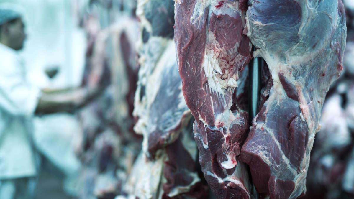 Carne avariata
