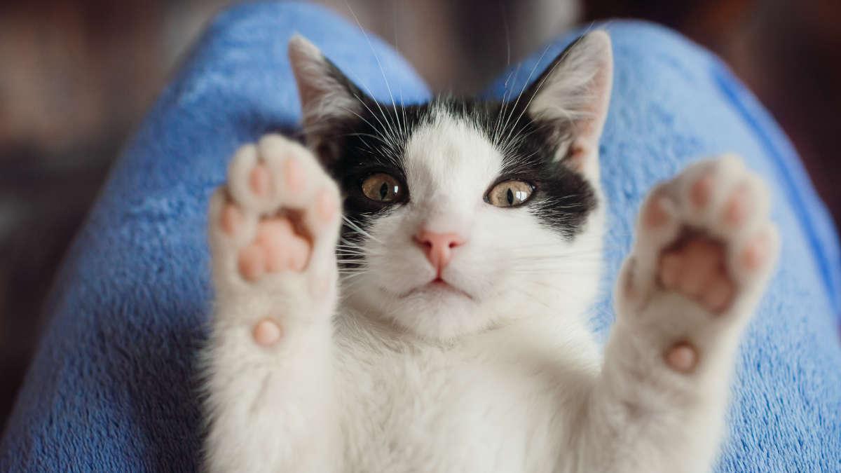 Gattini salvati dalla polizia municipale